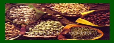 essay on cereals and pulses In 2013 the united nations declared that 2016 will be the international year of pulses the hope of the 2016 international year of pulses (iyp 2016) is to position pulses as a primary source of protein and other essential nutrients.