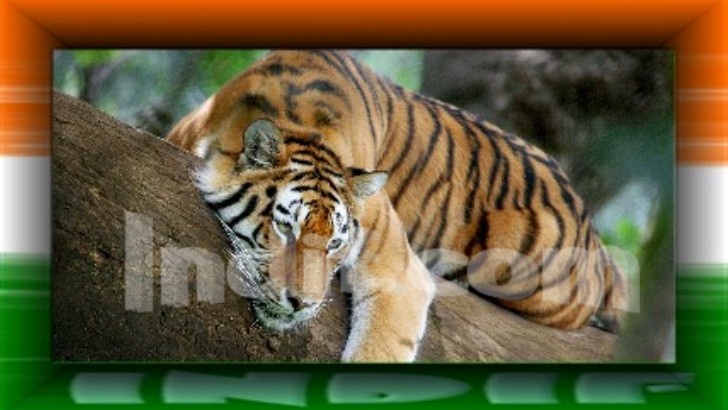 essays on tiger animal in hindi If you are a student you may seek help from your hindi teacher.