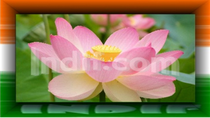 National Flower Lotus