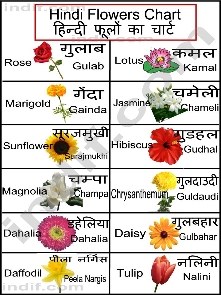 Hindi Flowers Chart Flower Names In